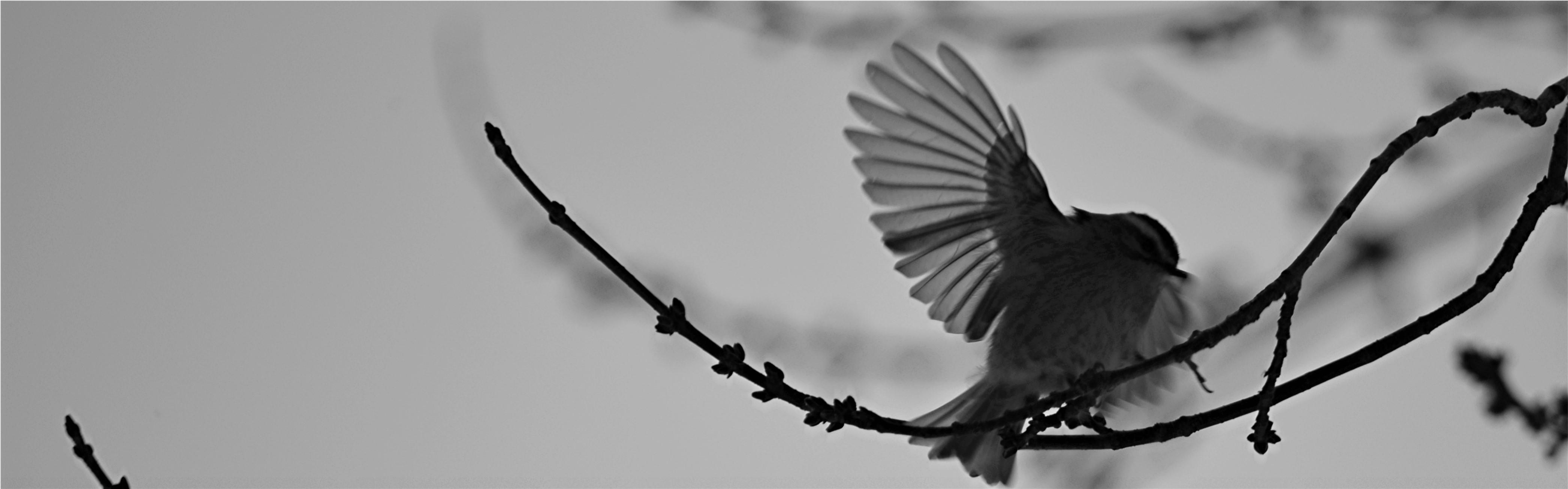 Heron Ecological, LLC